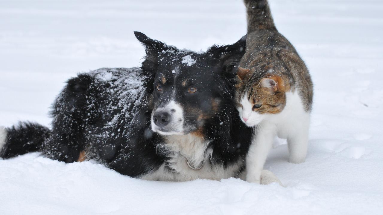 suplement na stawy dla psów i kotów